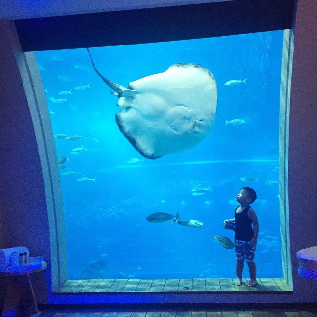 Ocean Suite-Unforgettable Underwater Fantasy at Resorts